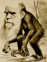 "© wikipedia.org - ""A Venerable Orang-outang"", a caricature of Charles Darwin"