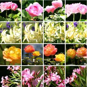 FeaturedImage_Sommergarten