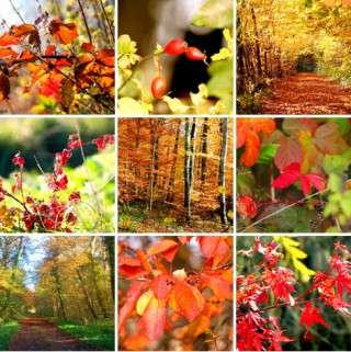Collage_Impression_d_automne