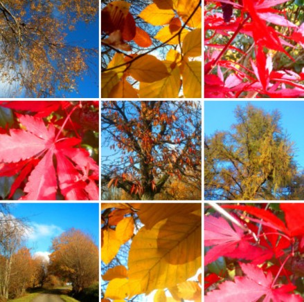 INSTAGRAM_Collage_November-Trees