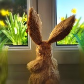 Bunny schaut ...